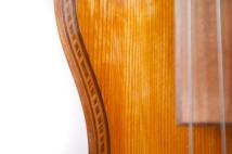 lupin fiol-12