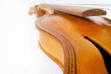 lupin fiol-5