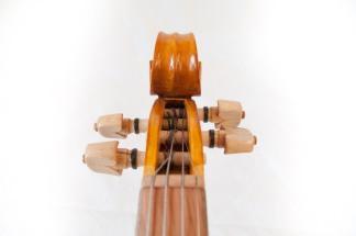 lupin fiol-8